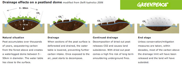 The impact of drainage channels on peatland
